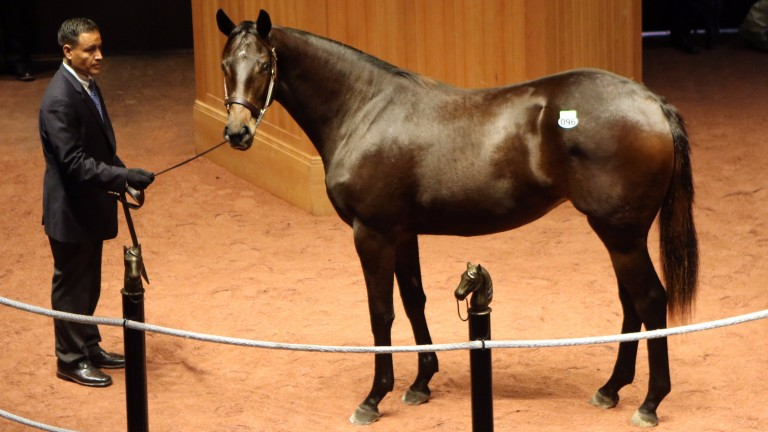 Lot 96: the Ghostzapper filly bought by Samantha Siegel's Jay Em Ess Stable for $275,000