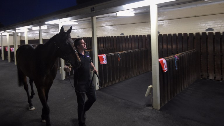 Winx arrives with strapper Umut Odemislioglu before her trackwork session during Breakfast With The Best at Moonee Valley