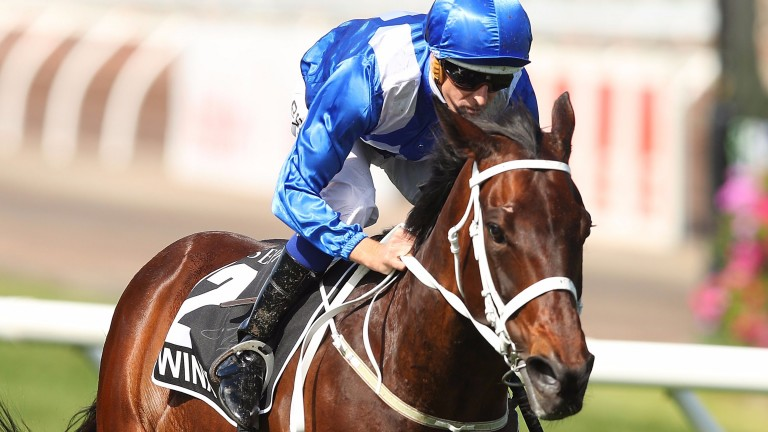 El Divino and Winx (pictured) are both out of the Al Akbar mare Vegas Showgirl