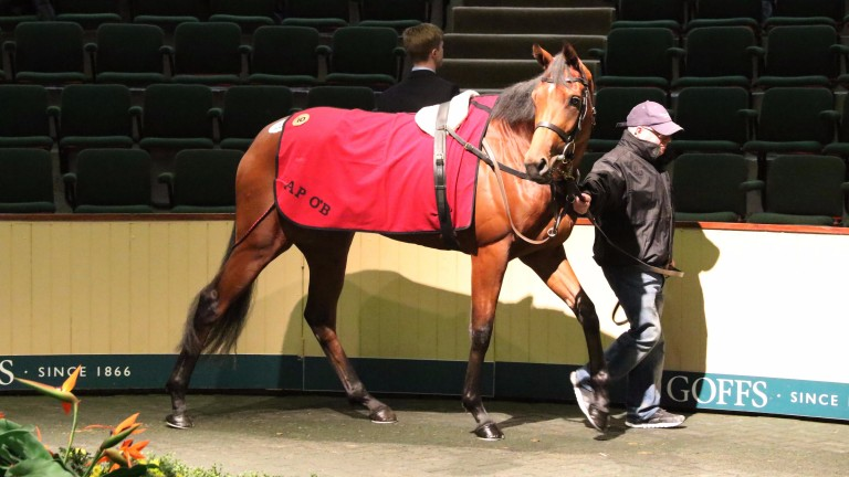 The Galileo filly Sarrocchi bought by Fozzy Stack for €215,000