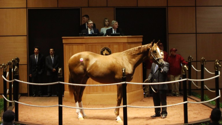 Hip 542, a colt by Violence, was the session topper for the sale's second day