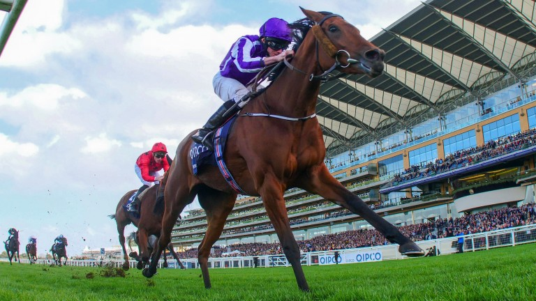 Hydrangea: returns to action in the Lanwades Stud Stakes