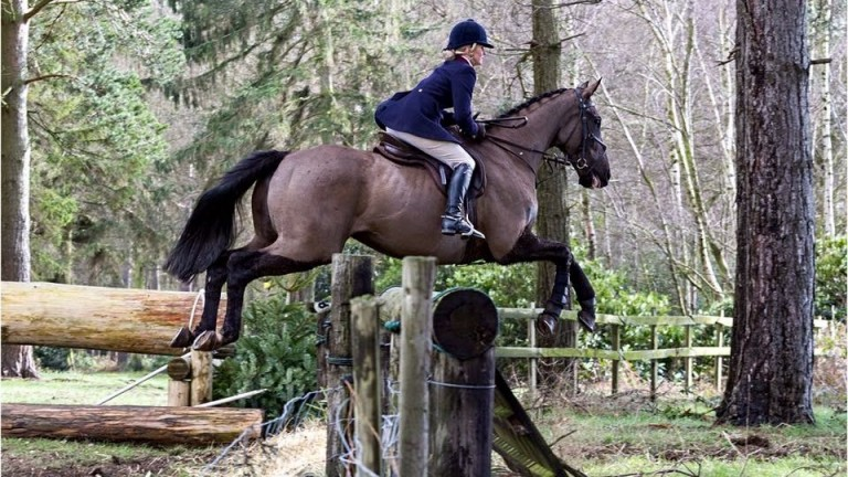 Former racehorse Sound Of Cheers in hunting action