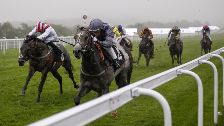 Havana Grey emerges from the gloom with a decisive advantage in the Group 3 Molecomb Stakes