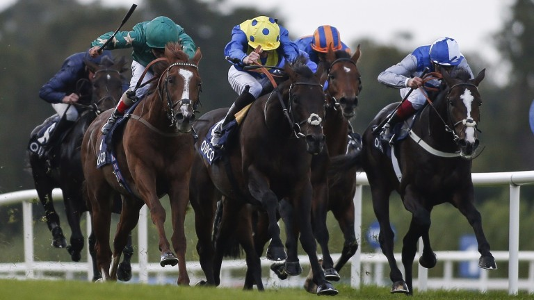 Decorated Knight (left) wins the Irish Champion Stakes last time. He'll be stepping up to a mile and a half in the Breeders' Cup Turf on Saturday