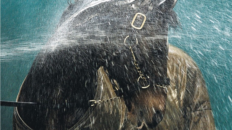 Danehill: the legendary sire of George Washington takes a shower at Coolmore in 2003
