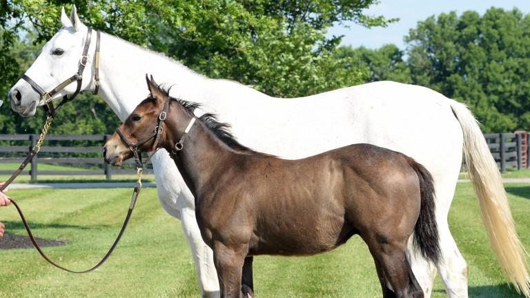 Grade 1-winning mare Joyful Victory with her colt foal by American Pharoah