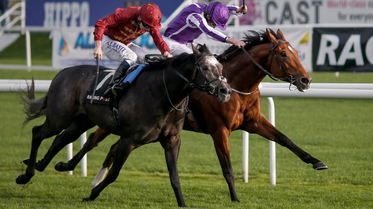 Roaring Lion (near): last year's Racing Post Trophy runner-up is entered in the Craven