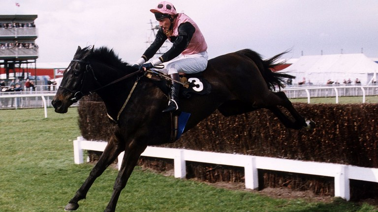 Cab on Target (Peter Niven) in action over fences