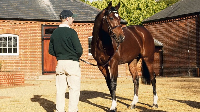 Frankel: is also the sire of Sir Peter Vela's Group 2 scorer Eminent