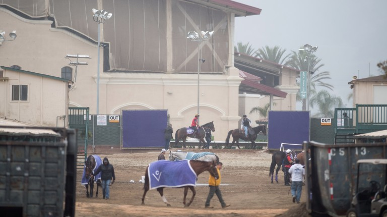 Taking a stroll: Del Mar is a laidback sort of place, unless you're a racehorse