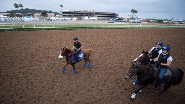 Ulysses and Queen's Trust (with pony) walk off the track after exercising on the turf at Del Mar