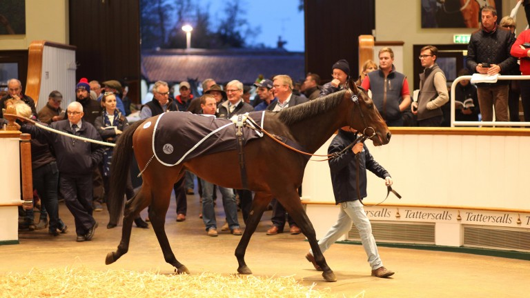 Lot 691: Pivoine in the Tattersalls ring before going the way of Alastair Donald for 340,000gns