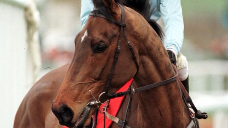 Unsinkable Boxer: landed millions of pounds at the 1998 Cheltenham Festival