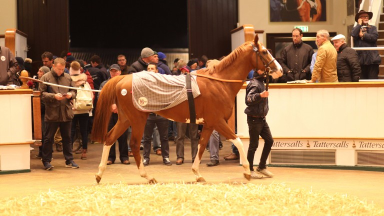 Solomon's Bay will continue his career in Hong Kong after Rupert Pritchard-Gordon landed the son of Exceed And Excel at 390,000gns