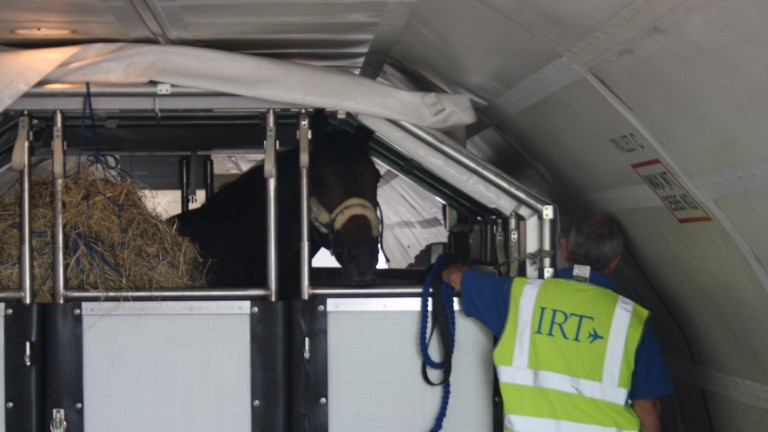 A first-class International Racehorse Transport passenger with a crate to himself