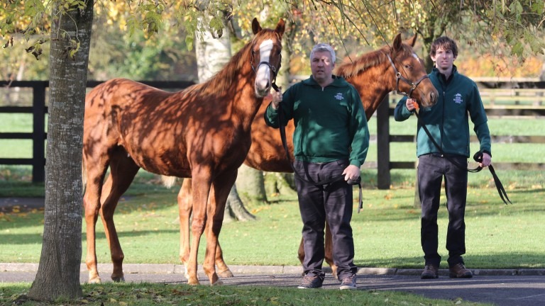 Free Eagle colts out of Uvinza (left) and Nebraas on show at the Irish Natioal