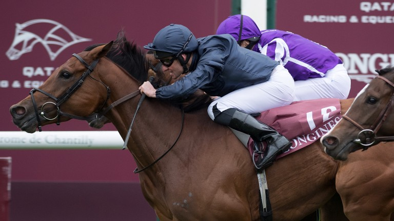 Rhododendron: the Prix de L'Opera winner could return at Naas