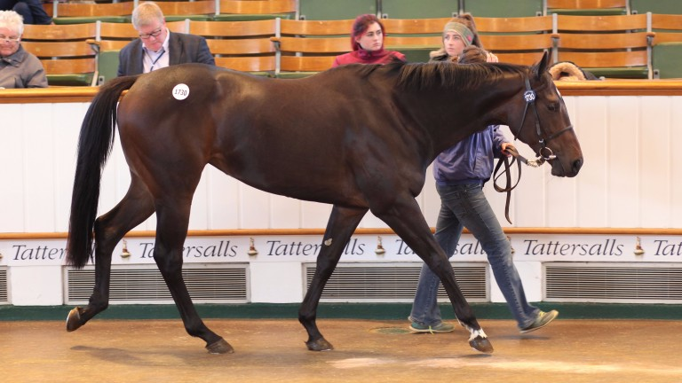 Lot 1730: Beckton topped the fifth and final session of the Tattersall Autumn Horses In Training Sale when bought by Gassim Mohammad Ghazali for 50,000gns