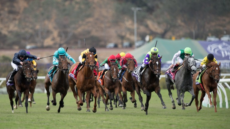 Rushing Fall (centre, purple and green silks) gives turf ace Chad Brown more glory