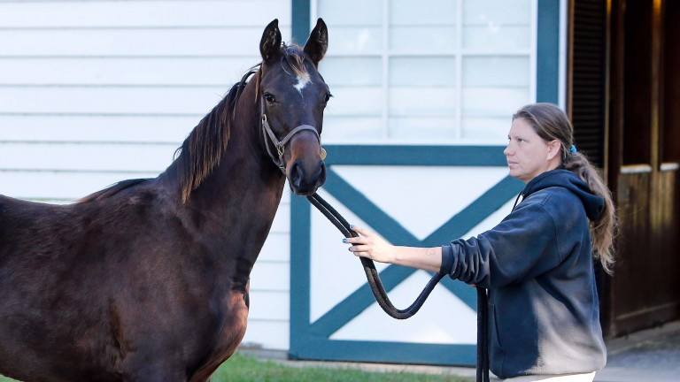 The Empire Maker filly foal out of the Giant's Causeway mare Quantify