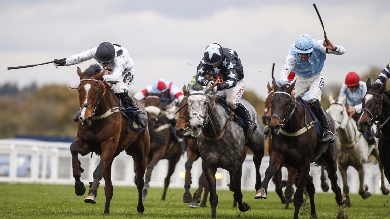 Elgin (left) could take his chance in the Greatwood Hurdle
