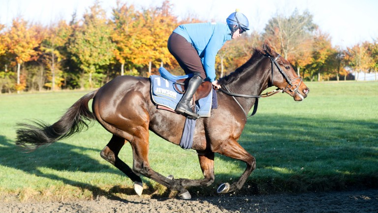 Go Conquer went well for a long way at Kempton over three miles last time