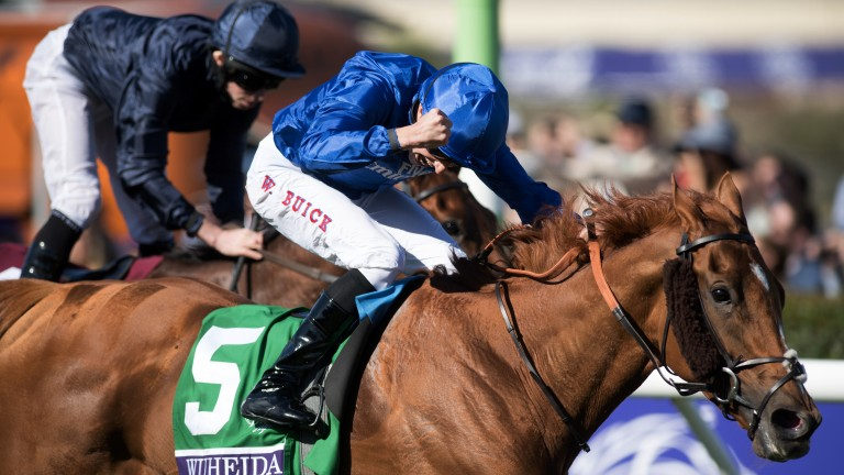 Wuheida: first Breeders' Cup winner for Dubawi