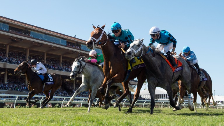 Marsha (left) finishes sixth in the Turf Sprint behind Stormy Liberal (centre) and Richard's Boy