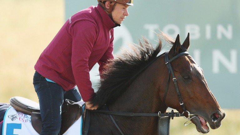 Tiberian, who is drawn in stall 23, prepares for his Flemington mission