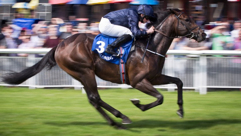 Peace Envoy: en route to winning the Anglesey Stakes at the Curragh in 2016