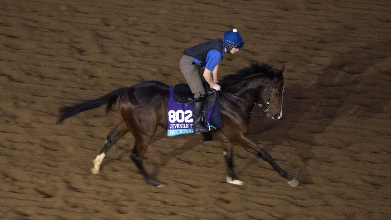 Beckford finished a respectable fifth in the Breeders' Cup Juvenile Turf and will continue to race in America