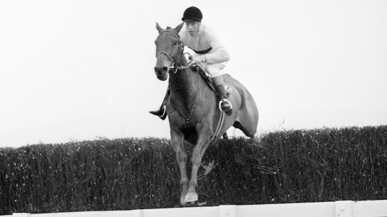 Arkle on his way to victory in the 1966 Cheltenham Gold Cup