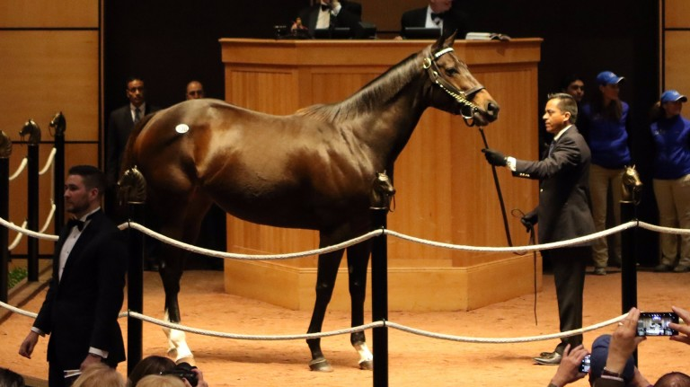 Tepin: the 2016 Queen Anne Stakes scorer fetched the second highest price of the day at Fasig-Tipton