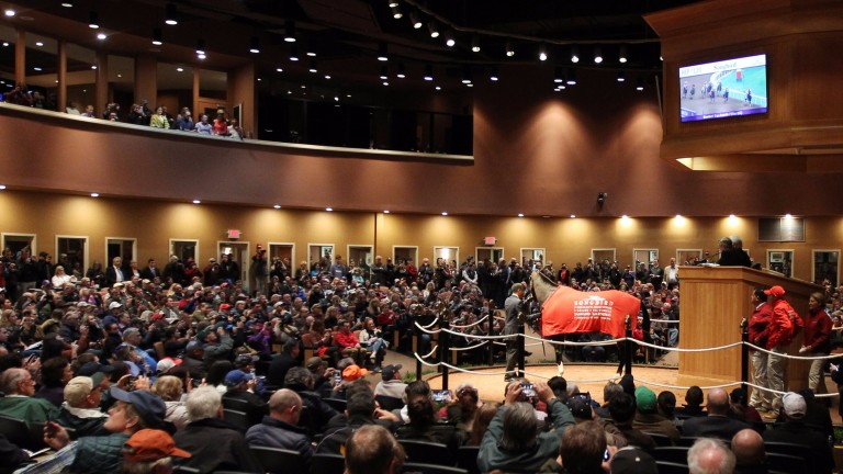 Songbird is the centre of attention in a packed arena at Fasig-Tipton