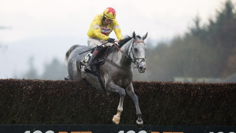 Politologue: won the Haldon Gold Cup for Paul Nicholls and Sam Twiston-Davies