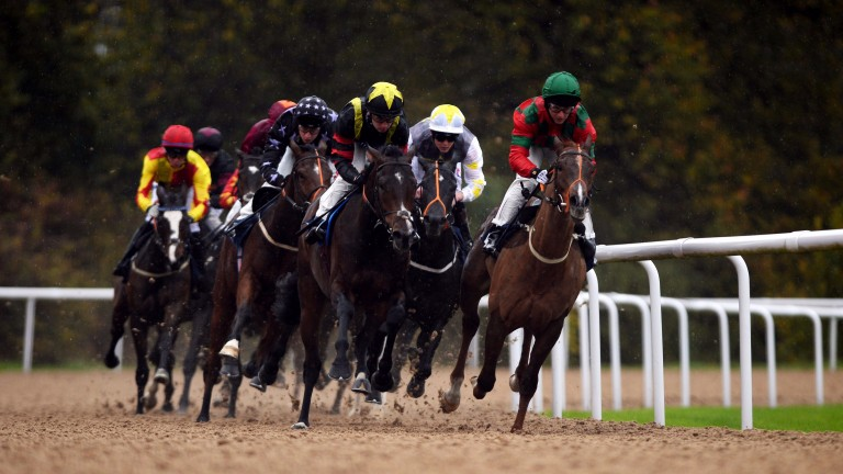 Runners in action at Wolverhampton