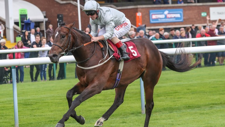 The Mark Johnston-trained Prestbury Park is expected to run well on all-weather