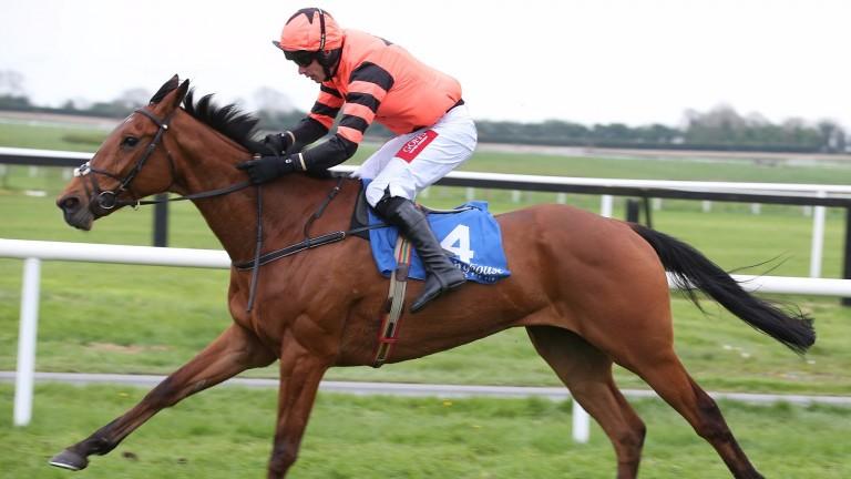 Jetz: won a beginners' chase at Navan last week over 2m