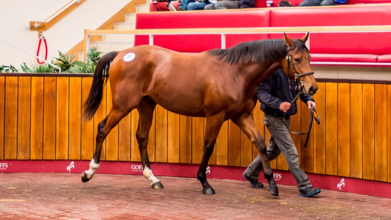 Lot 58: the Heeraat colt bought by Tim Easterby for £20,000