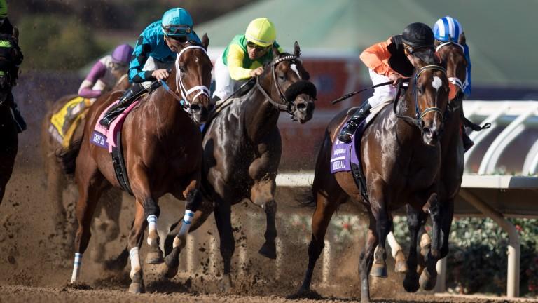 Roy H (left): Breeders' Cup Sprint winner is in action at Santa Anita this weekend