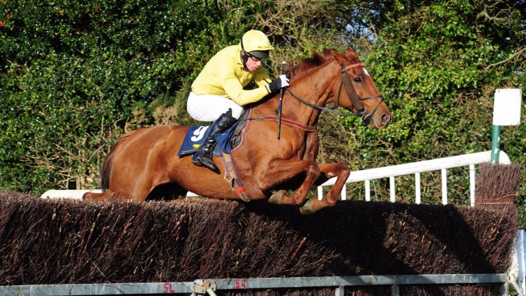 Paurick O'Connor trained Sliabh Mhuire Lass to taste success at Tinahely last weekend