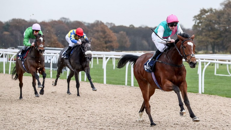 Enable wins a maiden race at Newcastle on November 28 last year