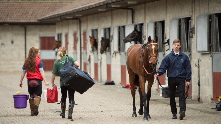 Stable staff: Ascot and Chelmsford identified as tracks that offer a free meal in the stable staff canteen