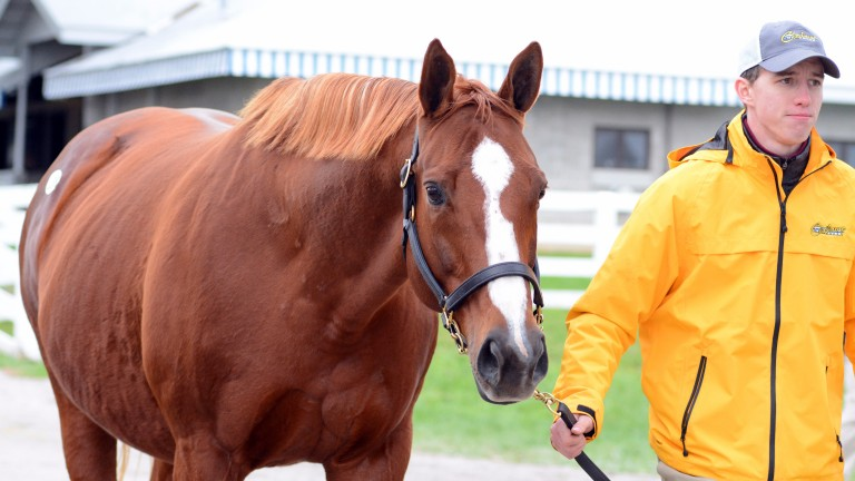 Enchanted Rock is led to the Keeneland sales ring