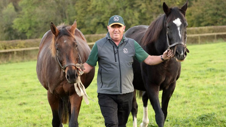 A pair of aces: Dar Re Mi (left) and The Fugue (right) with stud manager Terry Doherty