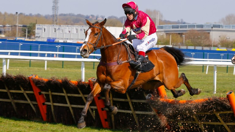 Ozzie The Oscar makes his chasing debut ar Warwick on Friday