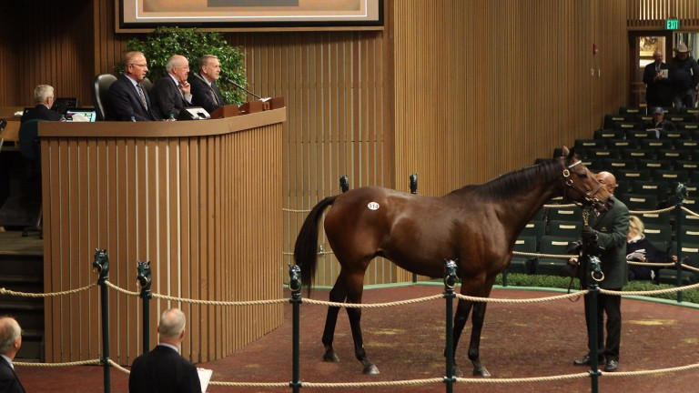 Fools In Love: Selling in the ring for $1 million at Keeneland on Thursday