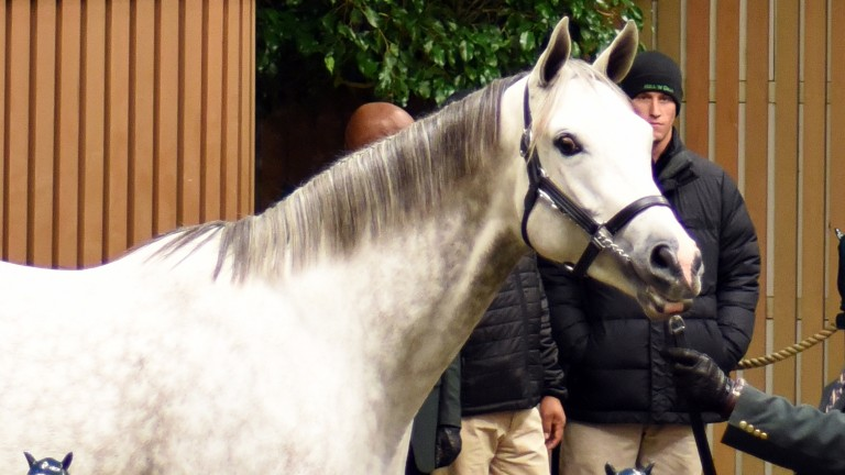 Tension, a daughter of Tapit in foal to Curlin, sells for $750,000 at the Keeneland November Sale