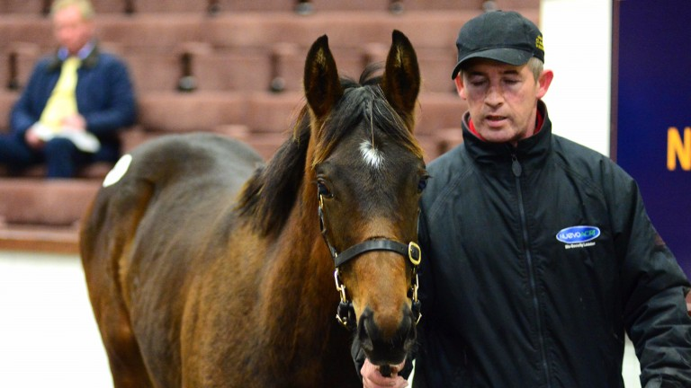 The Flemensfirth colt bought by Timmy Hyde of Camas Park Stud on behalf of Brendan Bashford Bloodstock
